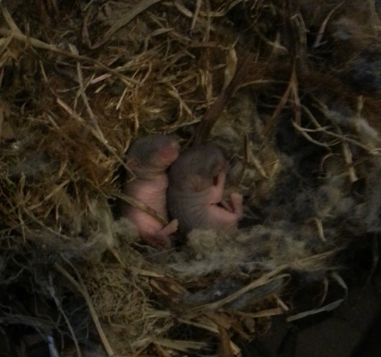 Newborn Mice from shop vac